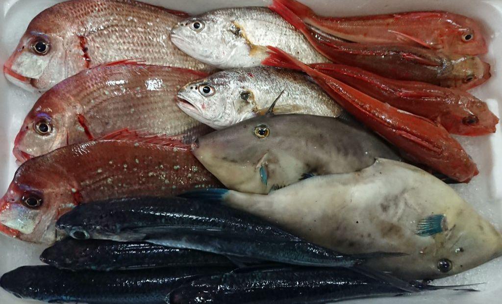 新潟鮮魚ボックス
